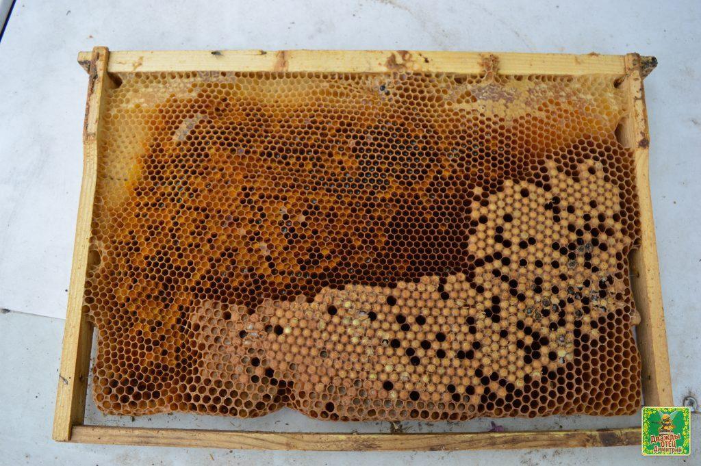 горбатый расплод у пчел фото западе продолжают упорствовать